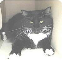 Adopt A Pet :: Mario - Mesa, AZ