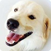 Adopt A Pet :: Doug - Austin, TX