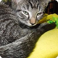 Adopt A Pet :: Sheldon - Medina, OH