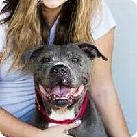 Adopt A Pet :: Huckleberry aka Guiness - Redondo Beach, CA