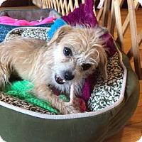 Adopt A Pet :: Serena - Marietta, GA