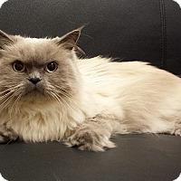Adopt A Pet :: Yoshi - Mission Viejo, CA
