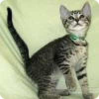 Adopt A Pet :: Ollie - Powell, OH
