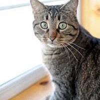 Adopt A Pet :: Abby - Lexington, KY