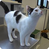 Adopt A Pet :: Oreo - Manning, SC