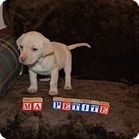 Adopt A Pet :: Ma Petite - Ogden, UT