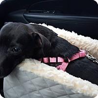 Adopt A Pet :: Aliza - Lebanon, CT