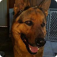 Adopt A Pet :: Jacob aka Jack - Tomah, WI
