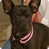 Adopt A Pet :: Sassafras - Ogden, UT