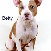 Adopt A Pet :: Betty - Bloomington, MN
