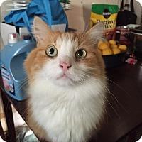 Adopt A Pet :: Gibbs - Nuevo, CA