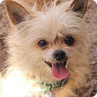 Adopt A Pet :: Nini - Phoenix, AZ