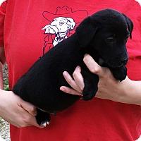 Adopt A Pet :: CILANTRO - happy boy! - Pewaukee, WI