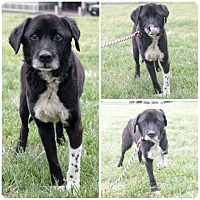 Adopt A Pet :: Rover - Active Senior Man! - Quentin, PA