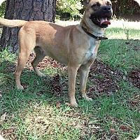Adopt A Pet :: Ginger - Lebanon, ME
