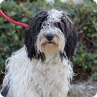 Adopt A Pet :: Tortellini - San Diego, CA