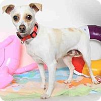 Adopt A Pet :: Abagail - San Leandro, CA