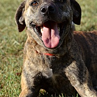 Adopt A Pet :: Delah - Washington, GA