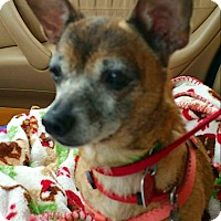 Adopt A Pet :: Baby Ruthie - Andalusia, PA