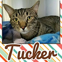 Adopt A Pet :: Tucker - Edwards AFB, CA