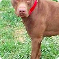 Adopt A Pet :: Louie - Brunswick, OH