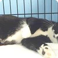 Adopt A Pet :: Kevin $20 - Lincolnton, NC