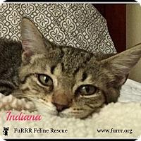 Adopt A Pet :: Indiana - Gonic, NH