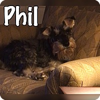 Adopt A Pet :: Phil - Millersville, MD