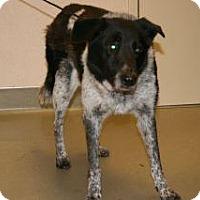 Adopt A Pet :: Queenie - Wildomar, CA