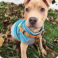 Adopt A Pet :: Kenai - Grand Rapids, MI
