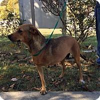 Adopt A Pet :: Emma - Plainfield, CT