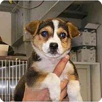 Adopt A Pet :: Alley - Alexandria, VA