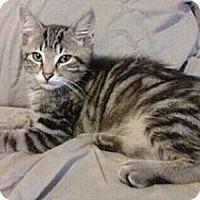 Adopt A Pet :: Titan - Byron Center, MI