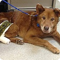 Adopt A Pet :: Rusty - West New York, NJ