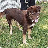 Adopt A Pet :: Keller - Richmond, VA