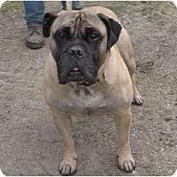 Adopt A Pet :: Rocky - Roy, WA
