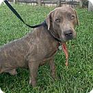 Adopt A Pet :: Courtesy post - Sammy