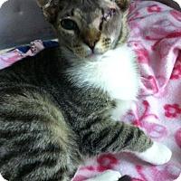 Adopt A Pet :: Peepers - Bensalem, PA