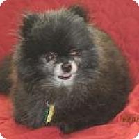 Adopt A Pet :: Lisa - South Amboy, NJ
