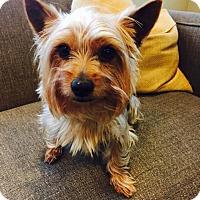 Adopt A Pet :: Fernando - Chicago, IL