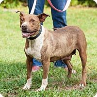Adopt A Pet :: RoseBud - Marion, NC