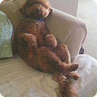 Adopt A Pet :: Derek - South Amboy, NJ