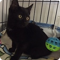 Adopt A Pet :: Gordon - Forest Hills, NY