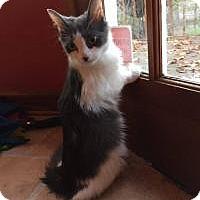 Adopt A Pet :: Sadie - Duluth, GA
