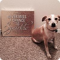 Adopt A Pet :: Sparkle - Dallas, TX