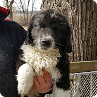 Adopt A Pet :: Luke - ADOPTED!! - Antioch, IL