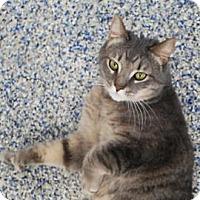 Adopt A Pet :: Coconut - Fairport, NY