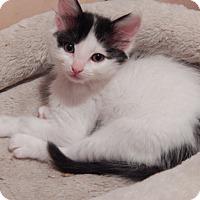 Adopt A Pet :: Queen Elizabeth - Pacific Palisades, CA