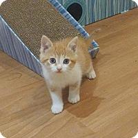 Adopt A Pet :: King Triton - Richmond Hill, ON