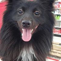 Adopt A Pet :: Ryder - Rocky Mount, NC